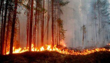 سویڈن شدید گرمی کی لپیٹ میں